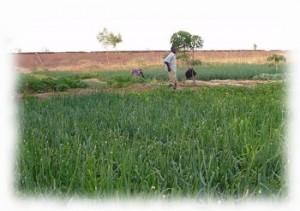 agriculture au Burkina Faso