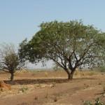 Paysage du Sahel Burkina Faso