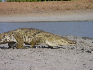 Crocodiles de Bazoulé Burkina Faso